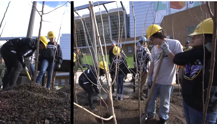 Corps members planting trees in St. Paul